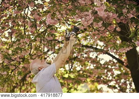 Spring Style. Man Tourist Use Camera Take Photo Of Cherry Blossoms. Sakura In Full Bloom Photography