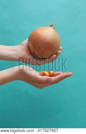 A Very Small And Very Large Onion In The Hands Of A Person, The Concept Of Choice, Difference.