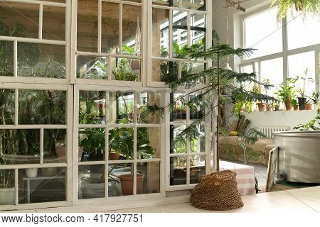 Home Garden, Orangery Or Greenhouse Interior With Houseplants, Old Wooden Furniture And Big Windows.