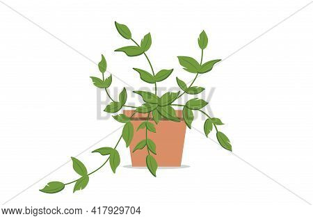 Indoor Plant In A Ceramic Pot. Indoor Flower. Climbing House Plant. Flat Vector Illustration On Whit