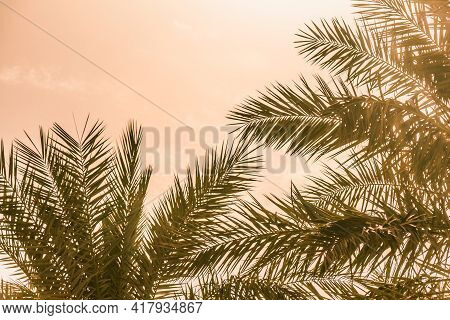 Tropical Tourism Paradise Palms In Warm Sunny Summer Sun Sky. Sun Light Shines Through Leaves Of Pal