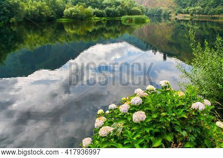 Hydrangea Flowers By The Lake With Reflections Of The Sky And Clouds In The Water. Asturias Spain. E