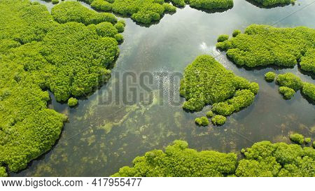 Mangrove Rainforest With Green Trees In The Sea Water, Aerial View. Tropical Landscape With Mangrove