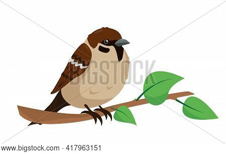 Sparrow On Branch Isolated. Sity Bird For Nature Design.