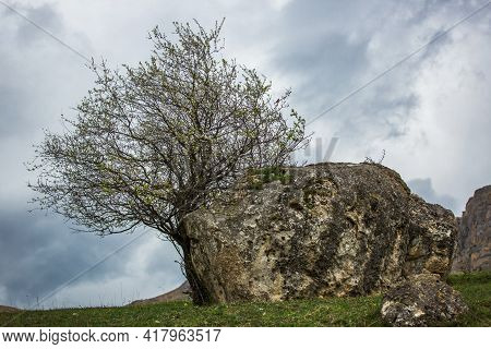Wood And Stone. Lonely Tree In The Mountains. Moody Dramatic Landscape. Blooming Tree