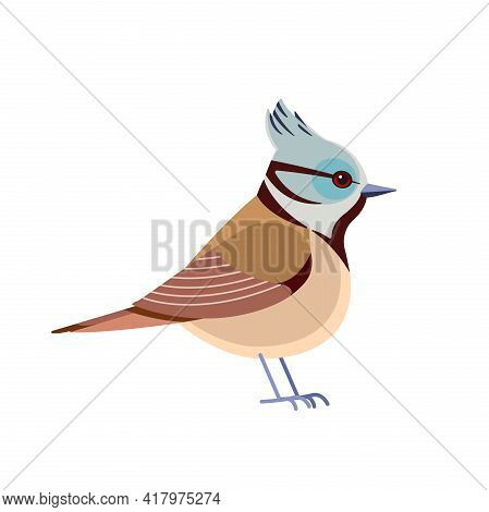 Crested Tit. European Crested Tit Is A Passerine Bird In The Tit Family Paridae. Little Bird Cartoon