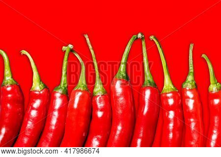 Red Chili Peppers Isolated. Vibrant Color Chili Pepper. Hot Spicy Food Ingredient. Empty Copy Space