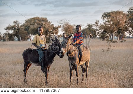 Namibia, Omusati Region, May 7: The African Boys Riding Donkeys In Early Cold Morning. Donkeys Are I