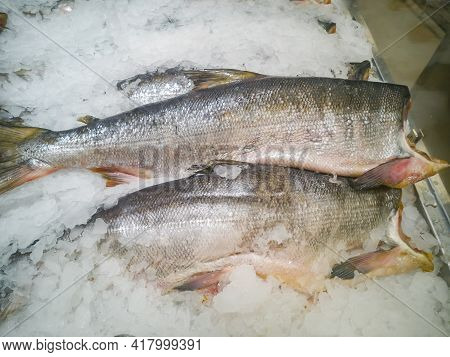 Large Fish For Food Frozen On Sale In A Hypermarket Among The Ice