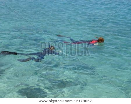 Tropical Snorkeling