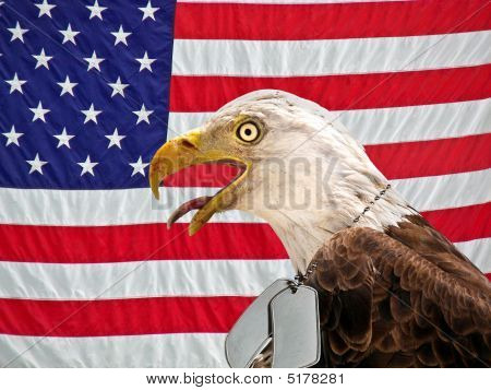 Regal bald eagle wearing military dog tags on an American flag. poster