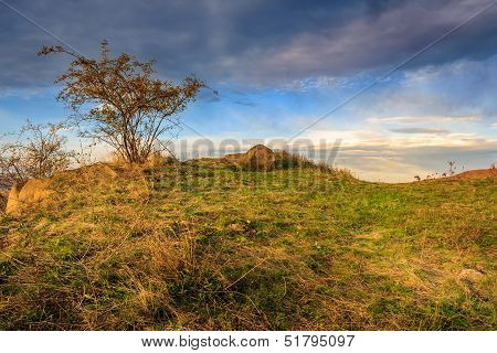 Autumn Wild Rose And Stone On A Yellowed Hill