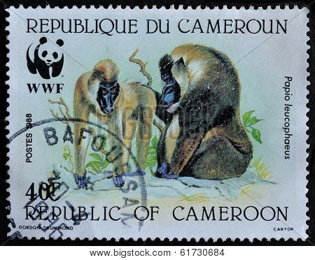 Cameroon Postage Stamp Shows Baboon Monkeys