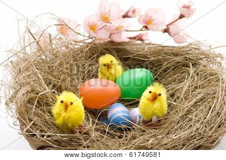 Easter fledglings with eggs in the nest