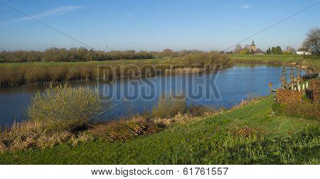 Pollard willows along a sunny river