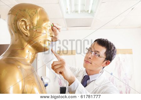 Chinese Medicine Doctor Point  Acupoint On Human Model