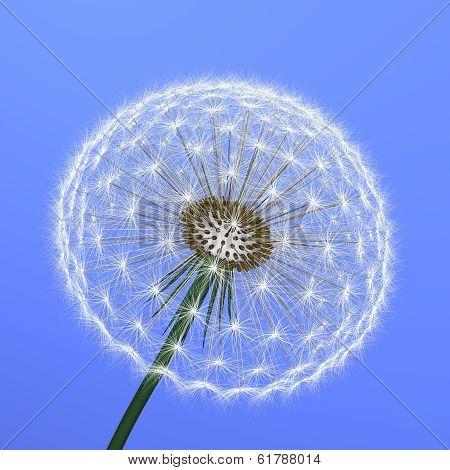 A Dandelion On Blue Background