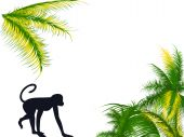 Monkey walking with the palm on the background poster