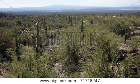 Scenic Inside The Arizona-sonora Desert Museum