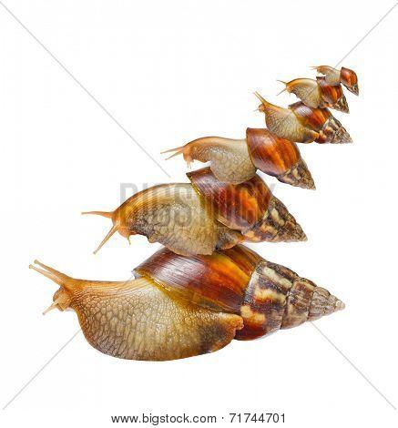 Many snails isolated on white background