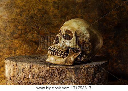 Still life with ideas about Art skulls
