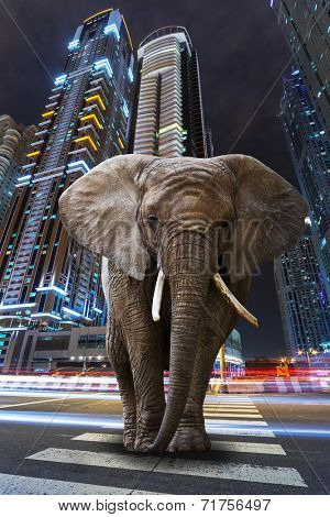 A metropolitan jungle with elephant walking on the road poster