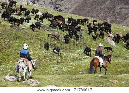 Stockriders With Flock In Alay Mountains On Pastureland