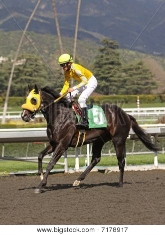 Jockey And Thoroughbred Race Horse