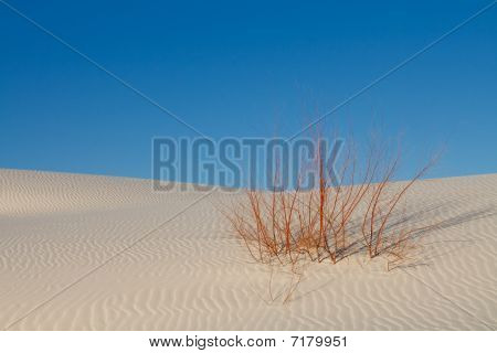 Survival - Lone Plant On White Sand Dune