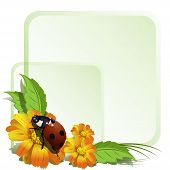 ladybird on yellow flower, the sheet and green frame poster
