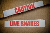 An Opened Cardboard Shipping Box Labelled 'Caution Lives Snakes' poster