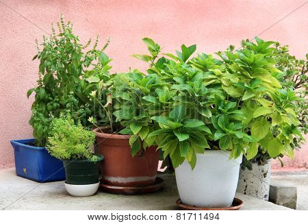 Mix Of Herbs In The Pot