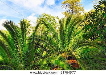 Tropical jungle.