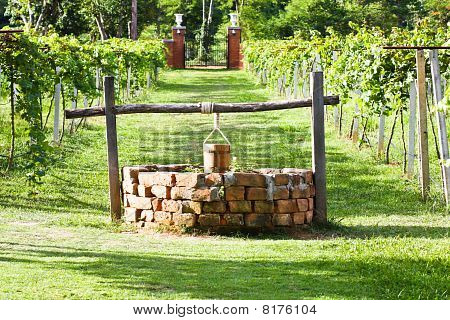 Water-well in grape field