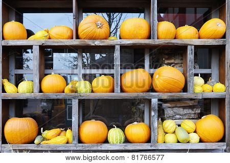 Row Of Fresh Pumpkins In Wooden Frame