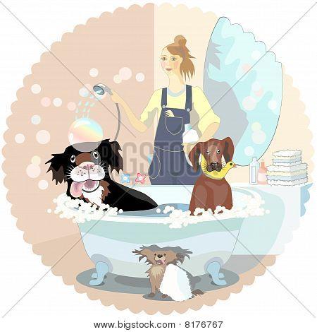 Dogs Washing
