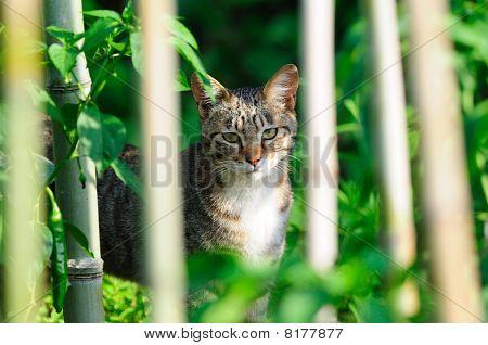 Katze in Bambus