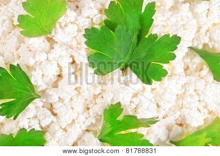 Fresh cottage cheese (curd) heap with parsley isolated on white background. poster