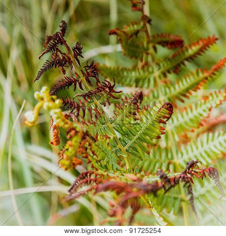 Leaves Of Fern Half-wilted