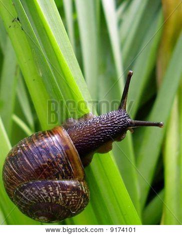 Snail climbing up