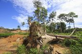 Deforestation environmental destruction of rainforest  poster