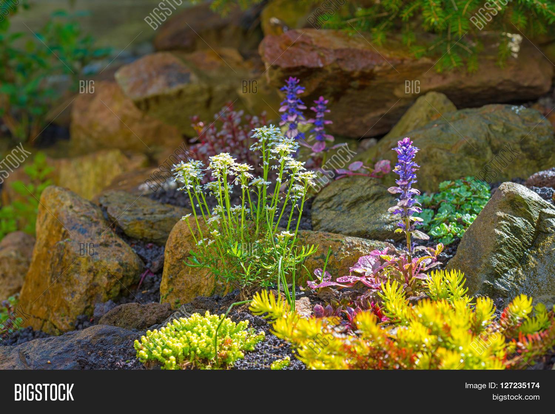 Flowers Garden Rockery Image & Photo (Free Trial)   Bigstock