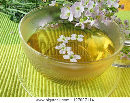 Homemade herbal tea with blooming cuckoo flower