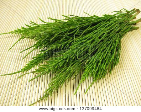 Bunch of fresh green field horsetail in natural healing