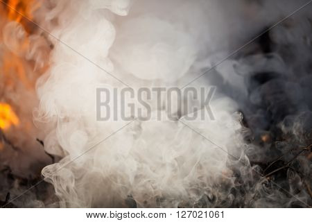 dense smoke and fire in the forest, closeup view
