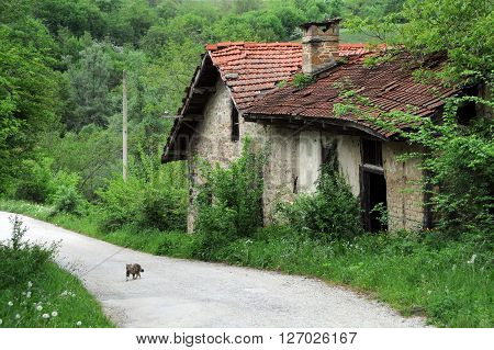 Abandoned watermill and a kitten on the dirt road in the Balkans