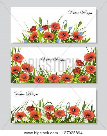 Set of horizontal banners with  beautiful red poppies, chamomiles, green grass and leaves on white background. Vector illustration for use in your design.