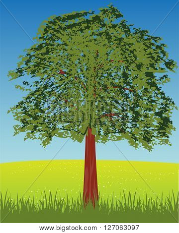 Summer glade and tree with foliage.Vector illustration