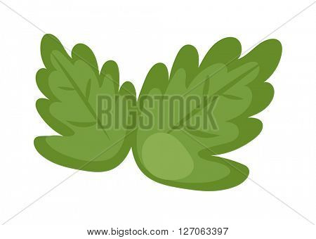 Fresh green lettuce isolated on a white, food fresh salad vegetable nutrition vector