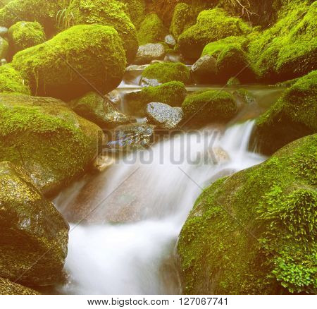 Waterfall Lush Foliage Greenery Cascading Scenic Concept poster